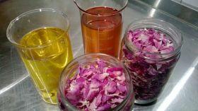 Pour vos cadeaux de fêtes, Floraluna vous propose une gamme aromatique d'huiles de massages, de mélanges pour diffuseurs, de roll-on ....