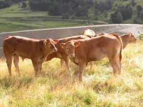 Vente de viande de boeuf et veau bio de chez Eric Van Boxel pour les 18 et 19 mai