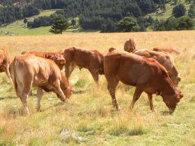 Eric van Boxel vous propose sa viande de veau bio pour les 23 et 24 avril