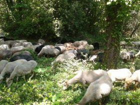Vente de colis d'agneau bio de Mariam et Xabi Goyty, éleveur de brebis