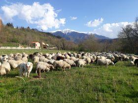 Livraison de colis de viande d'agneau bio, naturelle Vendredi 15 juin !!