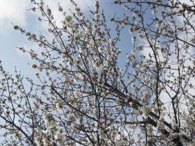 Deux ateliers de jardinage écologique, Dimanche 3 avril 2011