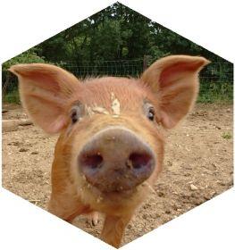Viande de porc et charcuterie pour vos grillades d'été au Mas Pujol