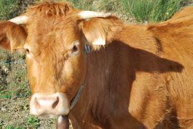 Eric Van Boxel vous propose sa Vente de veau et b½uf les 17 et 18 septembre