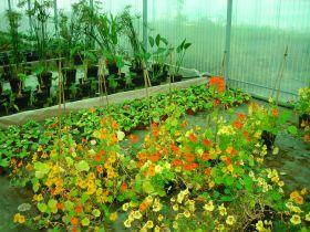 Ateliers et Visites Plantes gourmandes et comestibles chez Edulia