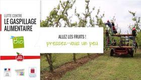Lutte contre le gaspillage alimentaire - Transformer en jus les fruits perdus de l'arboriculture bio