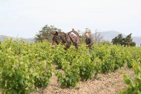 Repas vigneron Bio au Restaurant Le Miradou à Banyuls samedi 11 octobre à 20h