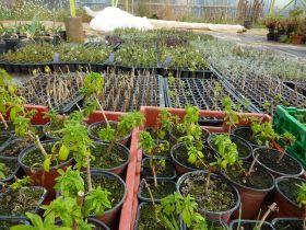 Les jardineries et pépinières de nos producteurs bio sont ouvertes au public depuis le 1er avril