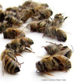 ALERTE ! Les lobbies agrochimistes imposent un pesticide tueur d'abeilles dernière génération en violation du droit européen !