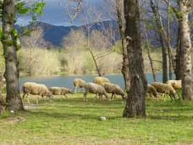 Appel à l'épargne solidaire pour maintenir une Bergerie à Villelongue dels Monts